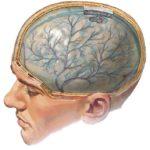 Диабетическая энцефалопатия: причины, симптомы, лечение
