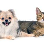 Гипотиреоз у кошек и собак: симптомы и лечение