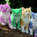 Сахарный диабет у кошек и котов: симптомы и лечение
