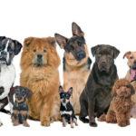 Сахарный диабет у собак: симптомы и лечение