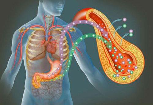 Инсулярный аппарат поджелудочной железы представлен β-клетками островков Лангерганса-Соболева