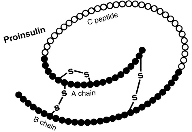 Что такое С-пептид
