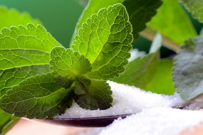 зеленый лист стевии на прозрачном порошке
